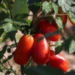 Blago ljuti paradajz S.O.S. 314ml, Fatalni Začini